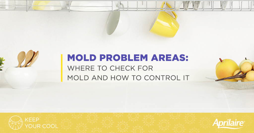 mold-allergy-problem-areas-where-to-check