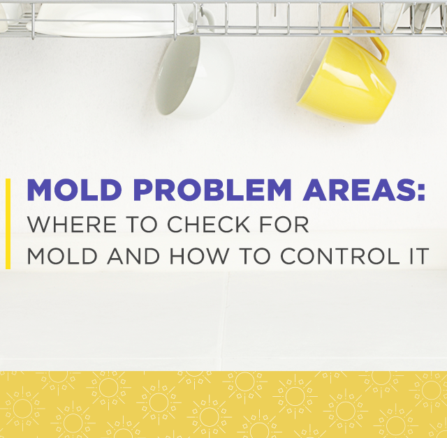 Mold Problem Areas: Where to check for mold and how to control it