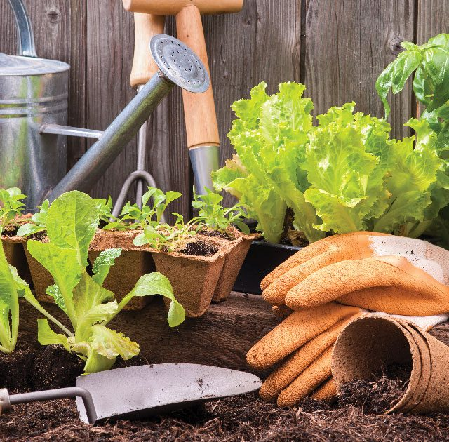 Eco-Conscious Landscaping Tips